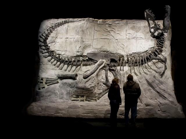 Dinosaur Fossils Provincial Park Alberta Canada